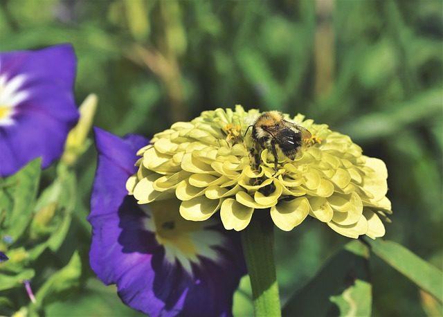 Ogród w zgodzie z naturą. Jak pielęgnować ogród ekologicznie?
