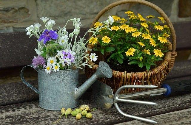 Susza a podlewanie ogrodu