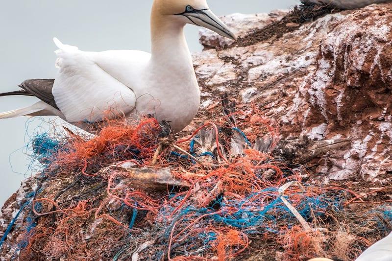 Plastik i tworzywa sztuczne niebezpieczeństwem dla flory i fauny