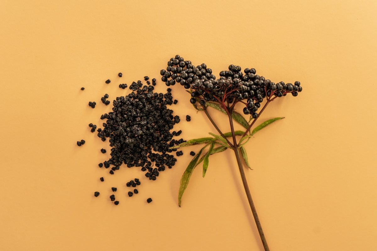Domowy sposób na infekcje? Pomocne mogą być owoce czarnego bzu!