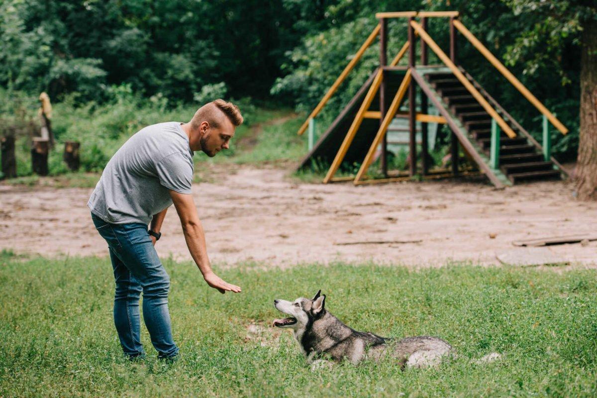 Tresura psów - nikt nie powiedział, że będzie łatwo