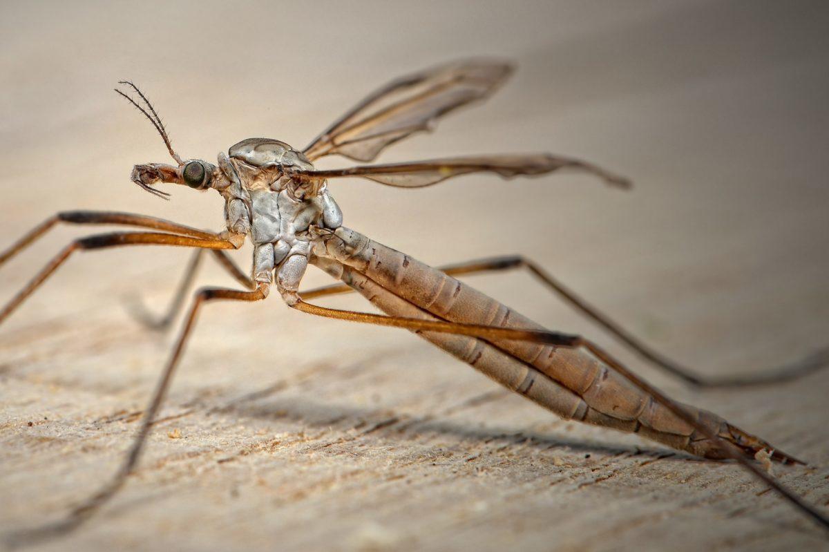 Sklep chemiczny – znajdź odpowiednią pomoc w walce z insektami!